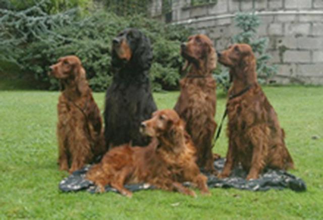 Dog Kennels In Port Talbot