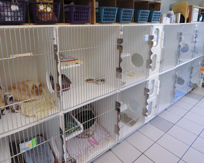 VCA Alexandria Animal Hospital image 0