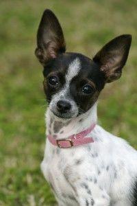 Home Dog Training Positively image 3