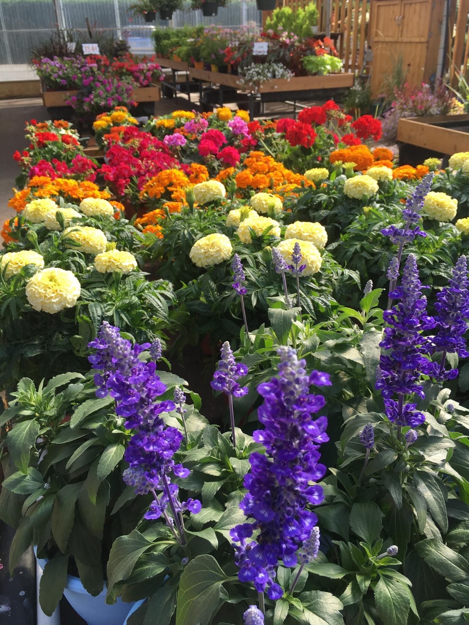 Patio gardens victoria bc ourbis for Gardening tools victoria bc