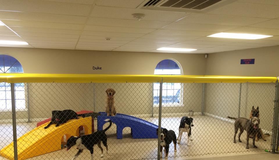 Dog Boarding Houston Co