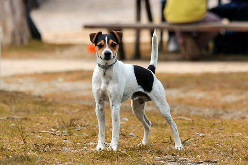 Kingsway Animal Clinic image 1