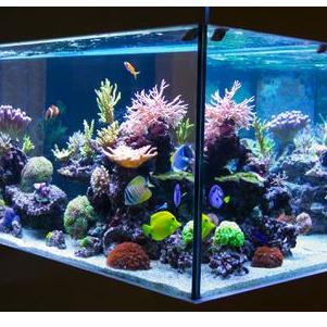 Blue Marlin Aquarium Service