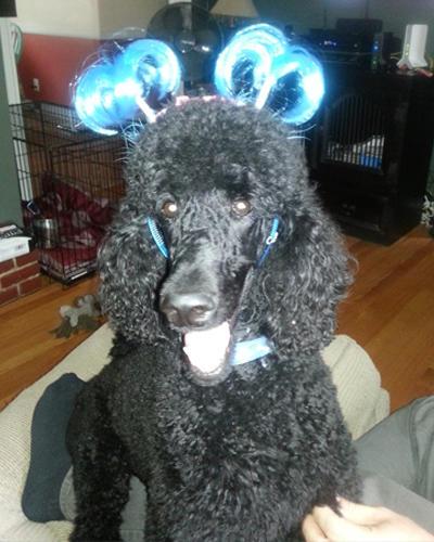 Bark Avenue Pet Salon image 8