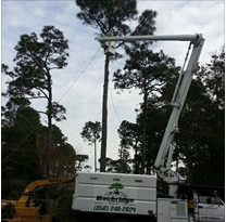 Backridge Tree Service image 3