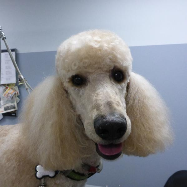Success Dog Grooming