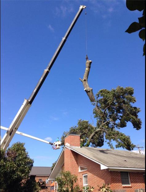 Allen's Tree Service image 0