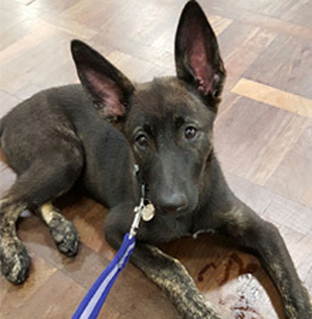 Dog Training Classes Shropshire