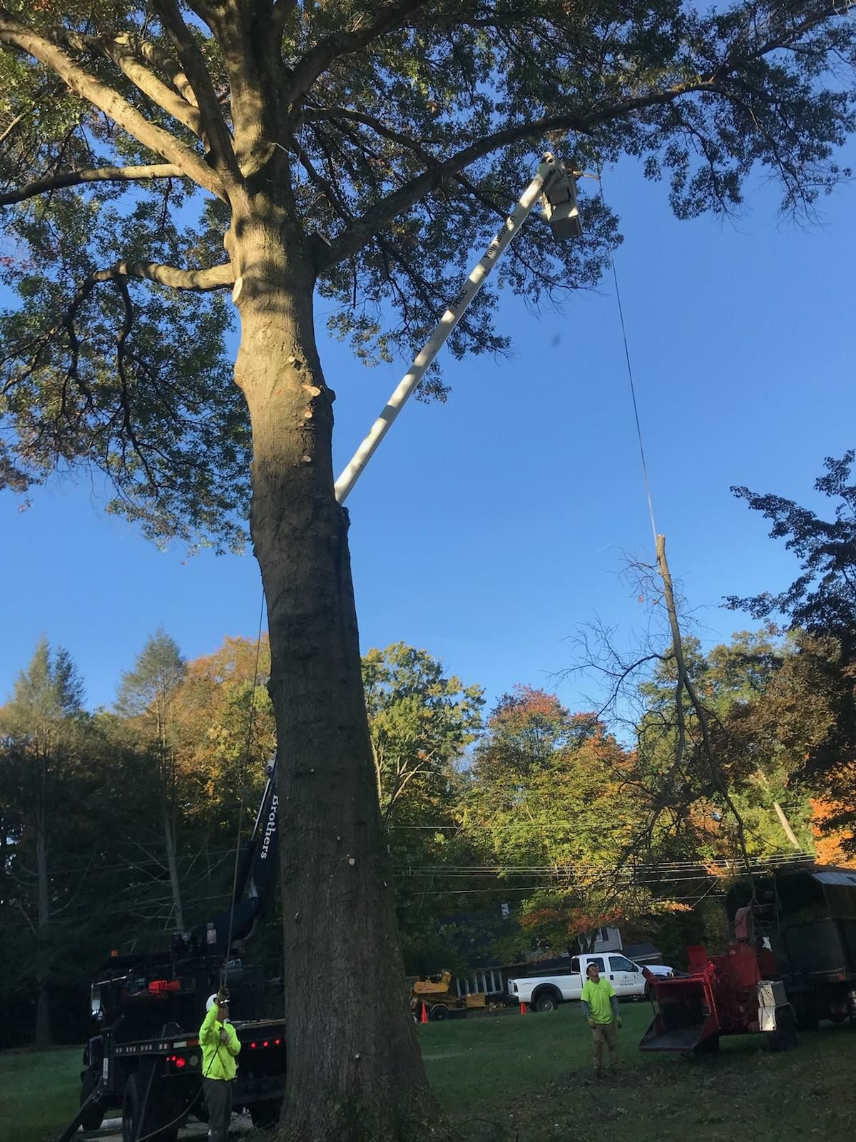 Four Brothers Tree Service Inc. image 43