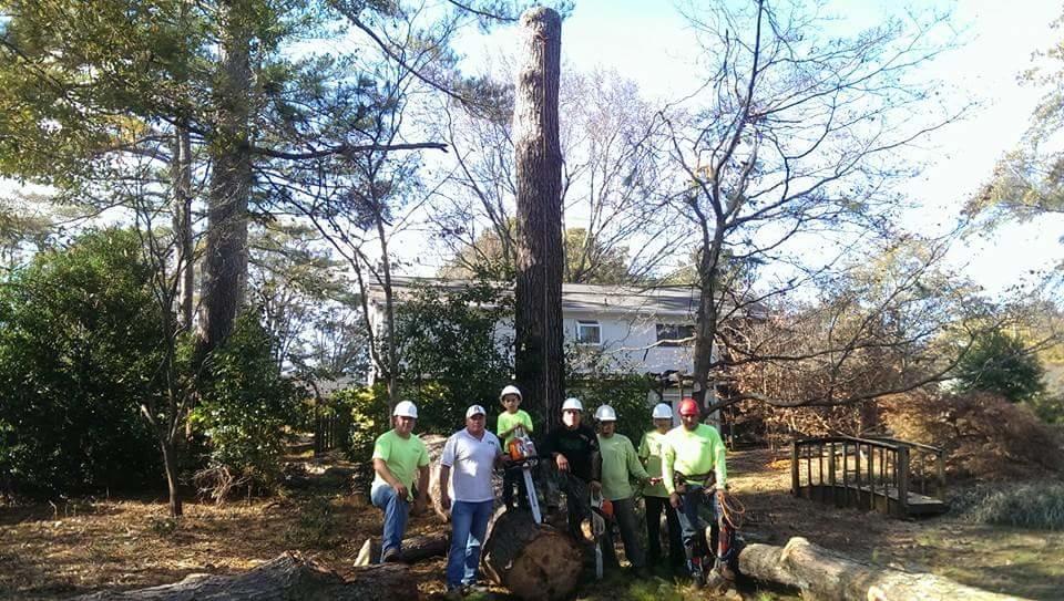 Beaver Tree Service Inc image 5