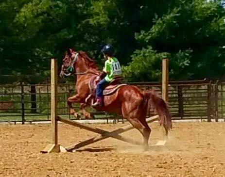 Equestrian Enterprises, Inc. image 3
