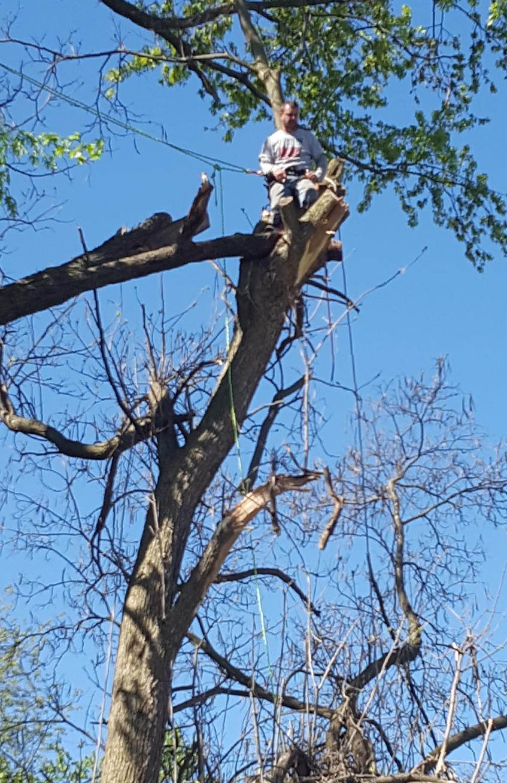 Coffman's Tree Service image 40