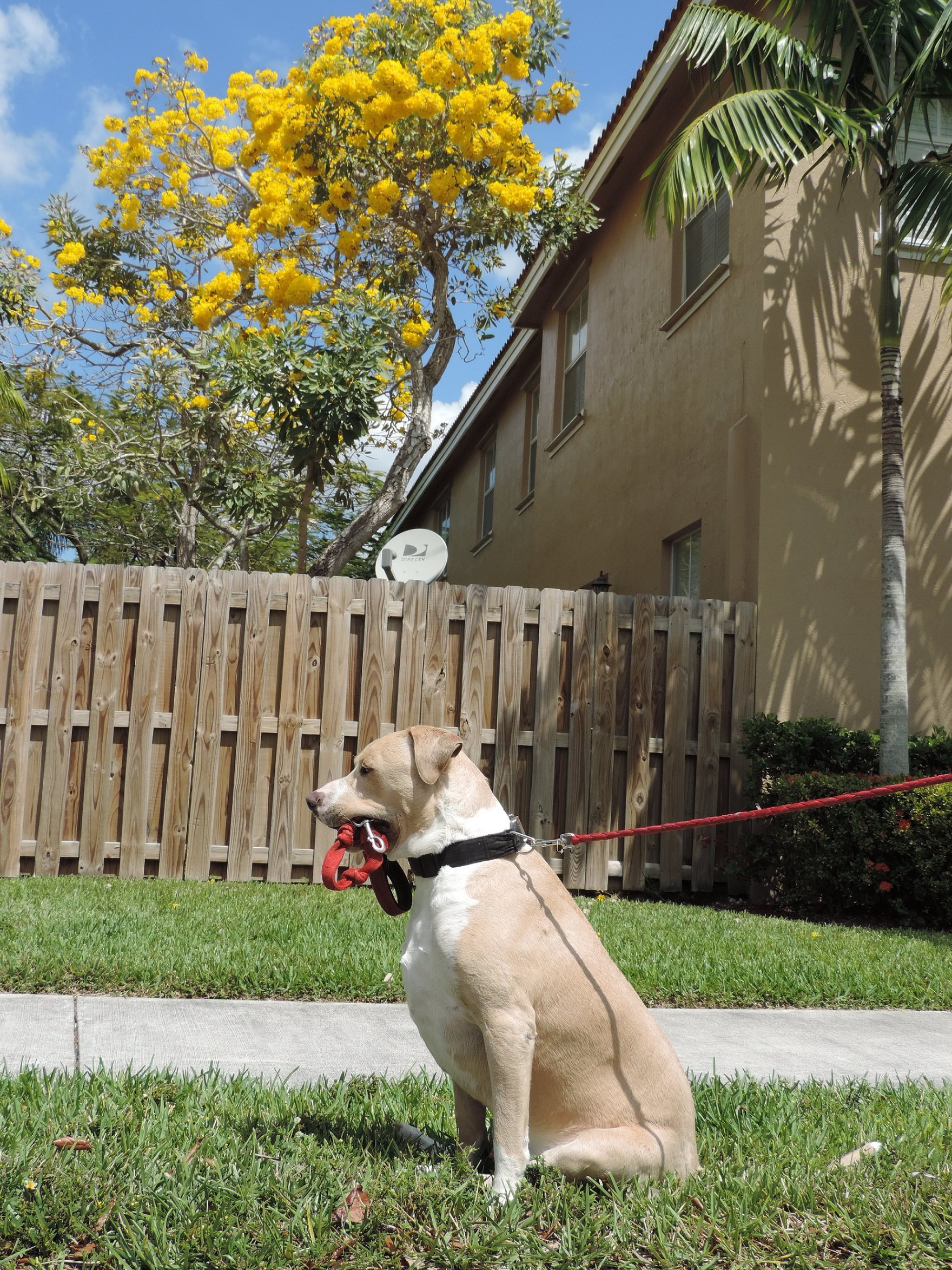 Apartments in homestead fl homestead florida apartments for 2445 sw 18th terrace