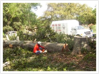 Houston Tree Team image 13