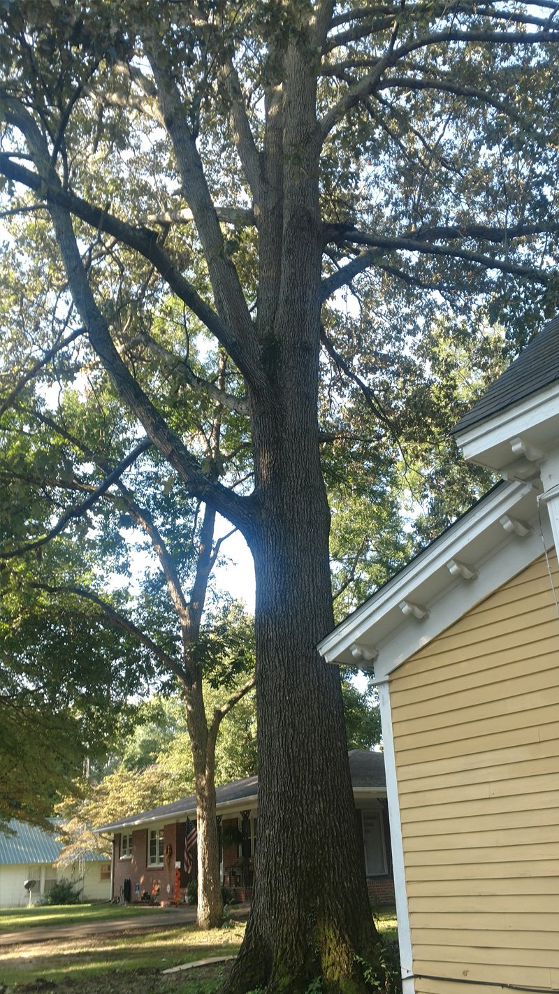 Hernandez & Sons Tree Service