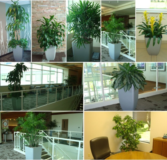 Plant Pros Of Omaha image 0