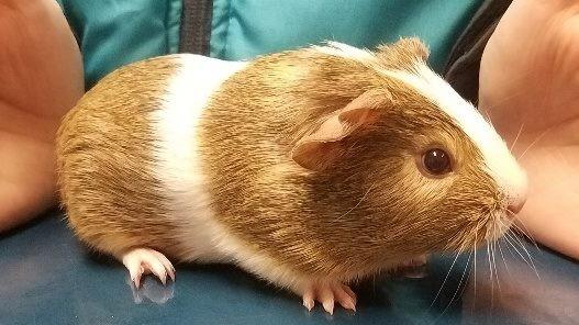 Oakview Veterinary image 3