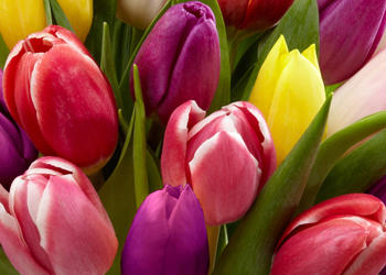Flowers By Kari image 1