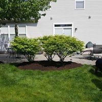 Ivan & Son Lawn Care image 15