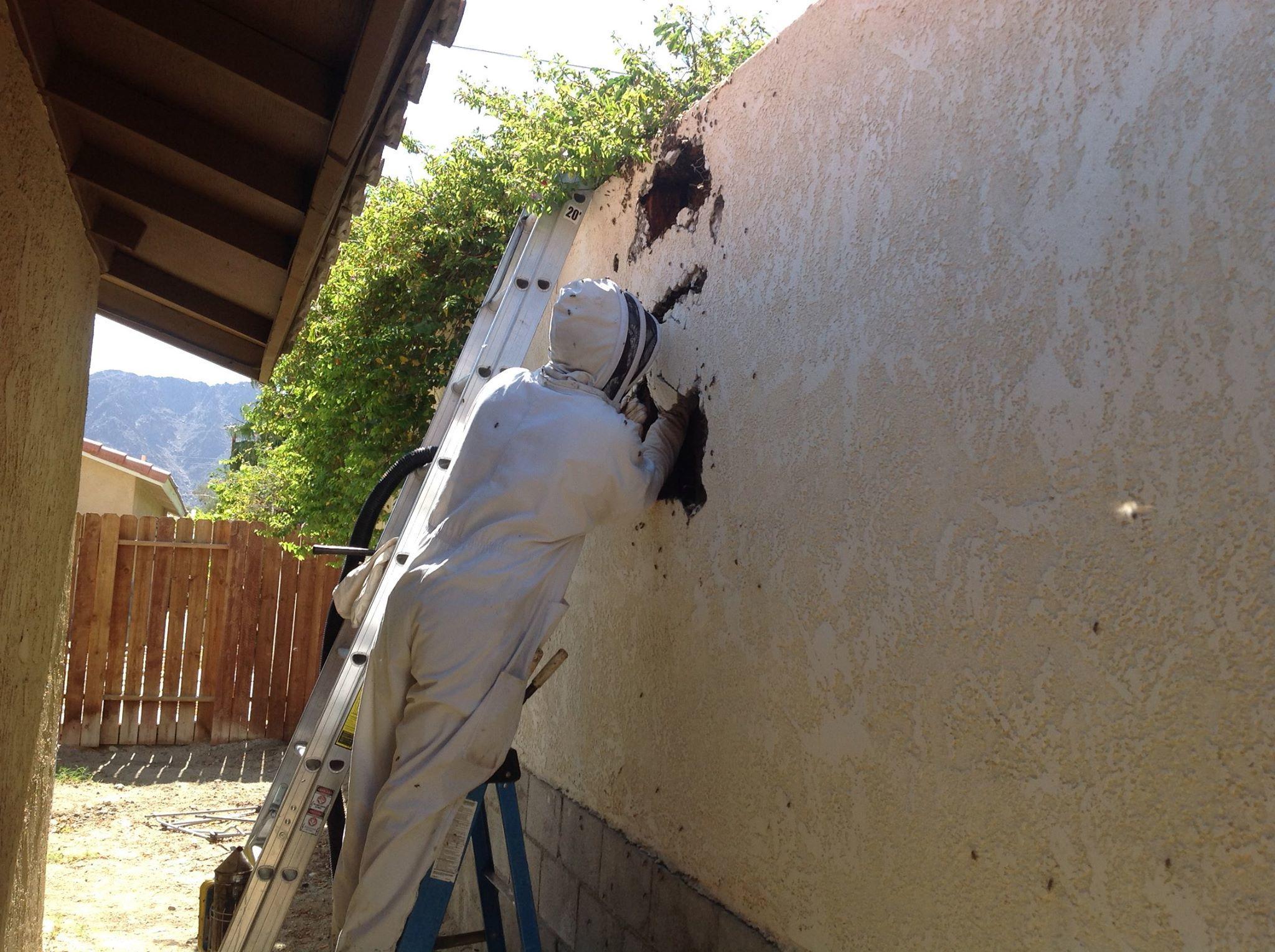 Killer Bee Pest Control, Inc image 4