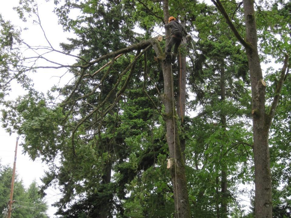 Tree Harmony Arborists, LLC