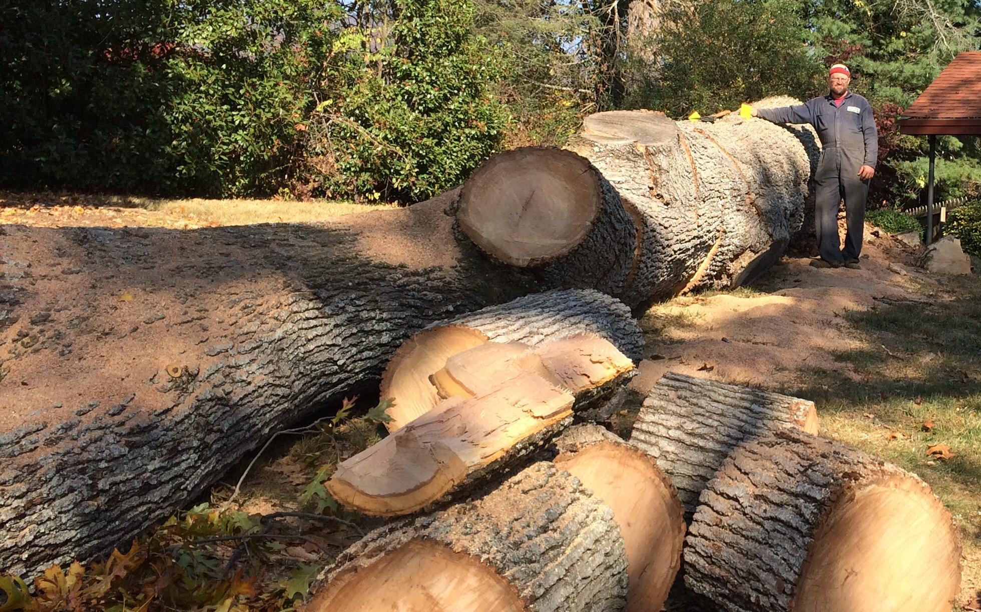 Jacob's Tree Service image 2