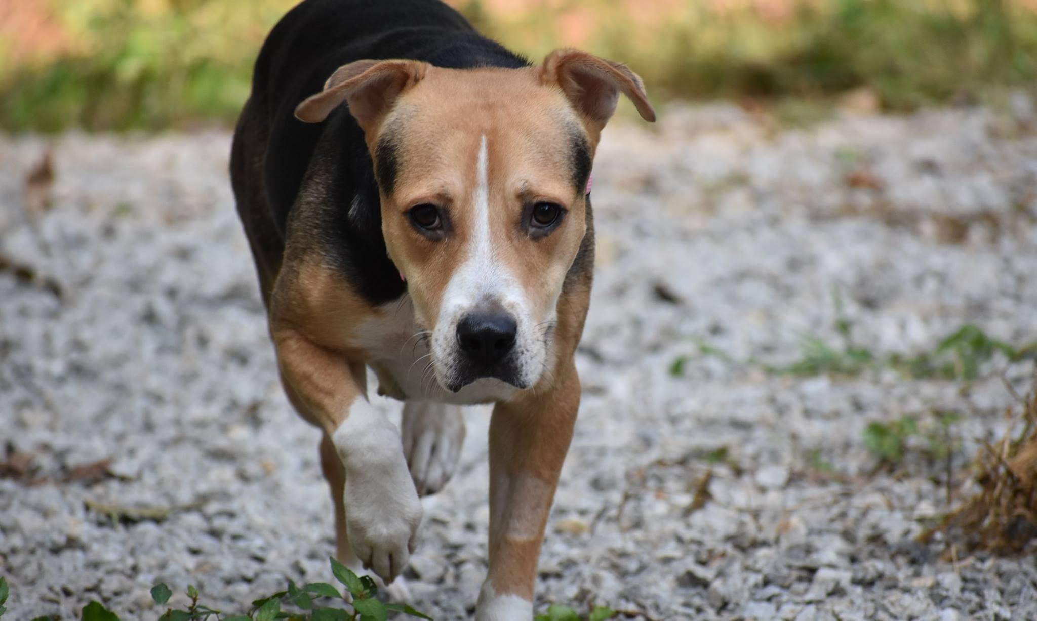 Kritters Country Lane Kennels image 3