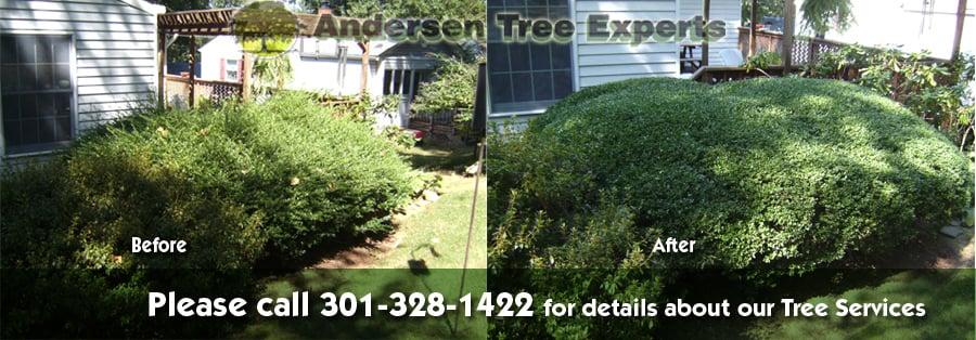 Andersen Tree Experts image 1