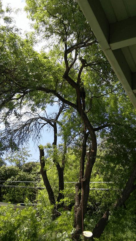 Almanza Tree Trimming Service & More image 0