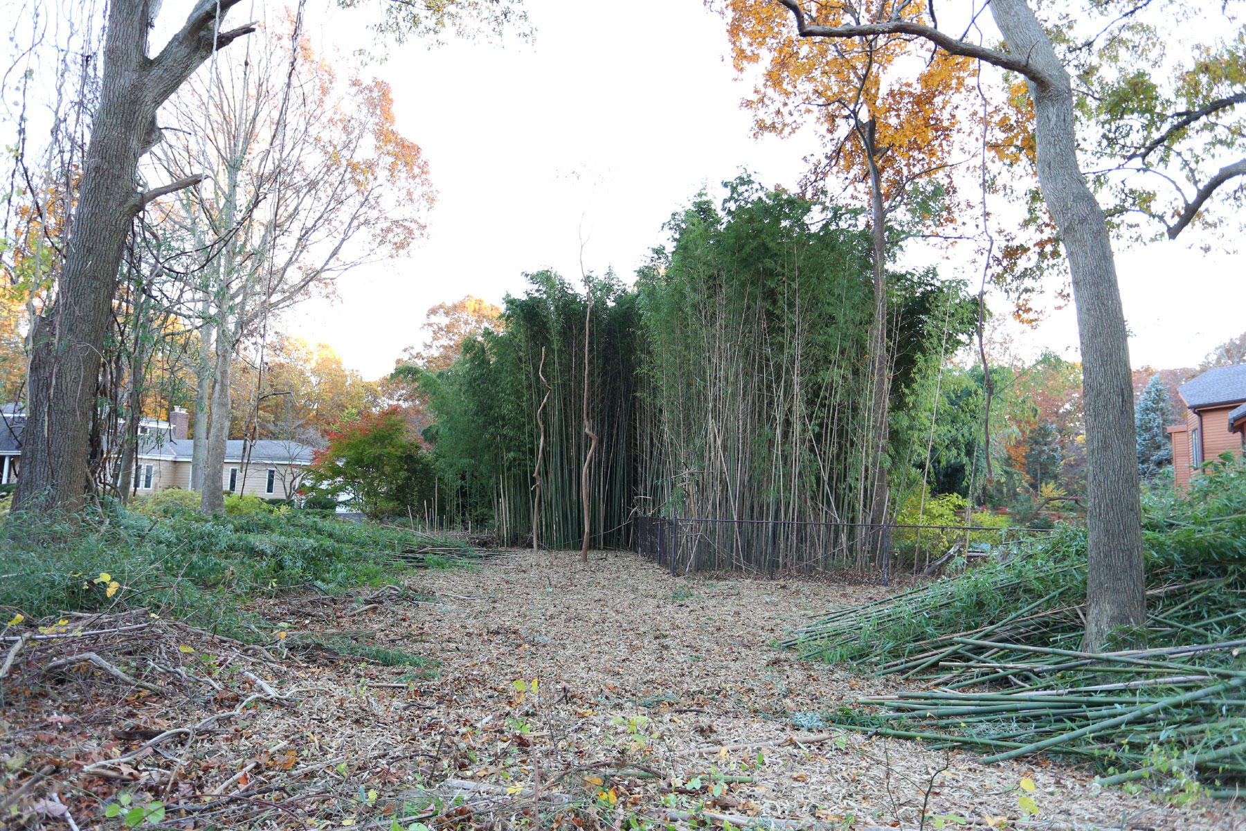 Got Bamboo Inc image 0
