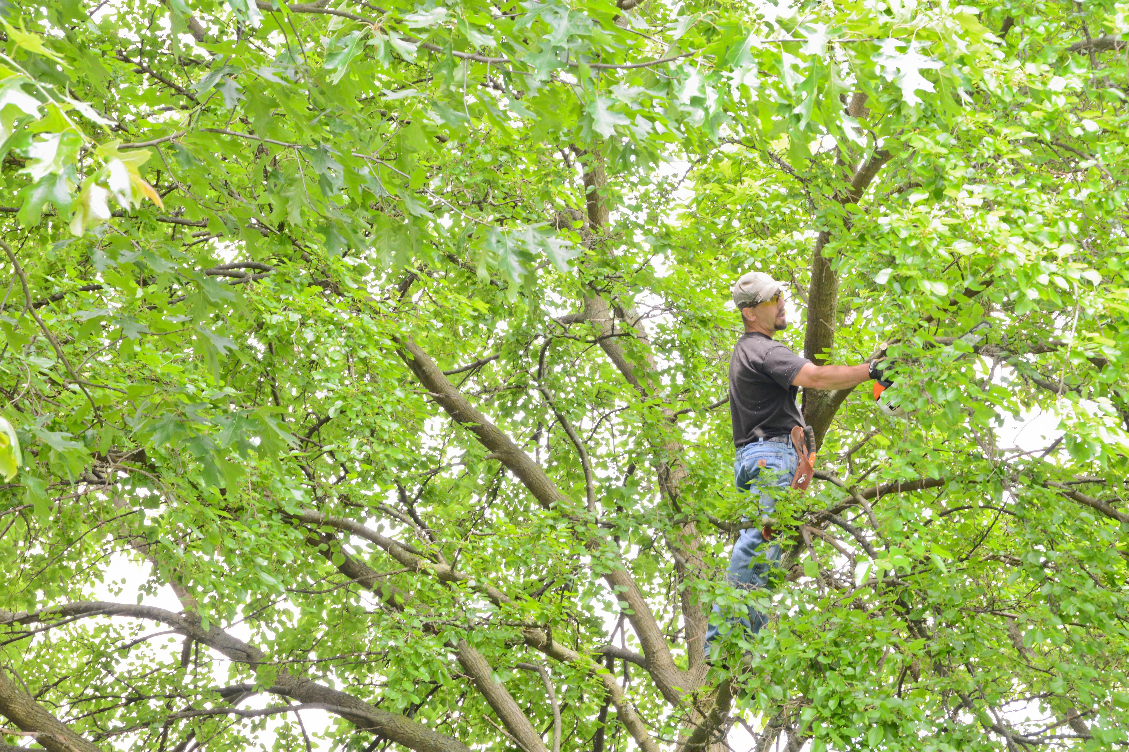 No Sweat Lawns & Trees, LLC image 4