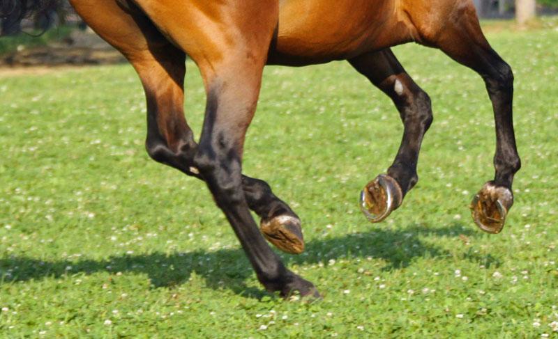 Aaron Hutchison Horseshoeing image 1