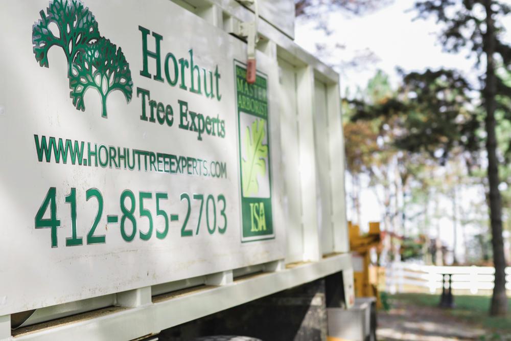 Horhut Tree Experts image 4