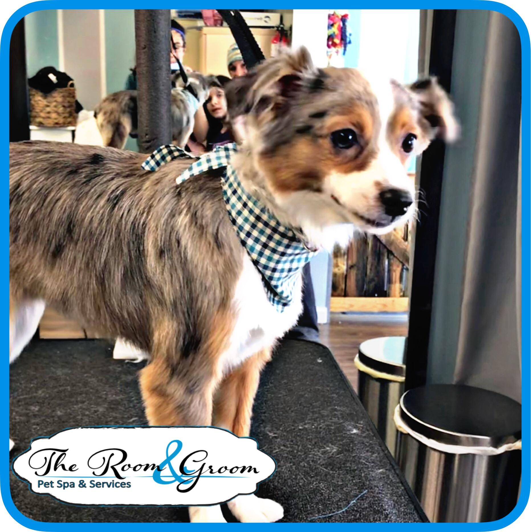 The Room & Groom, Pet Spa & Services image 35