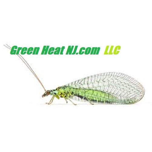 Green Heat NJ  Llc