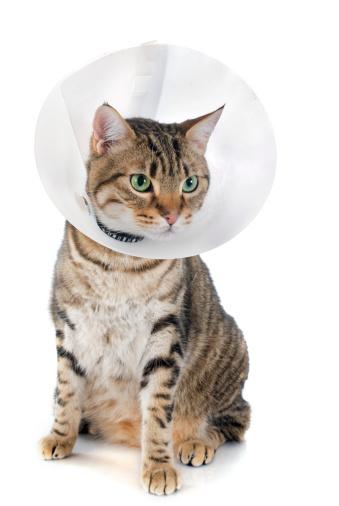 Affectionately Pets House Calls Inc image 1
