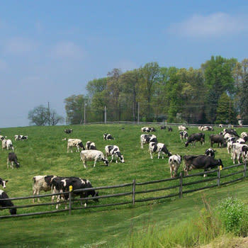 Perrydell Dairy Farm image 1