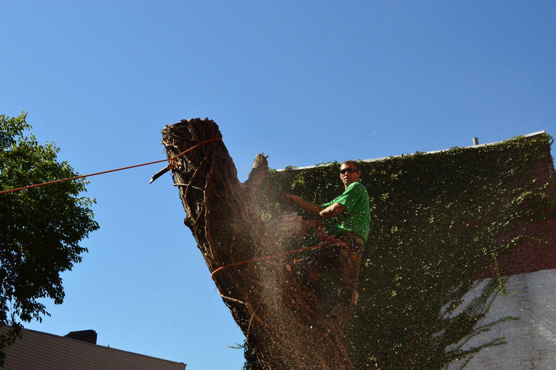 Peru's Tree Service Inc. image 7