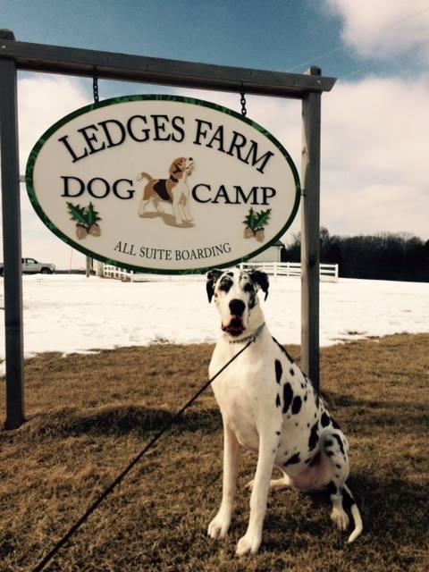Ledges Farm Dog Camp image 6