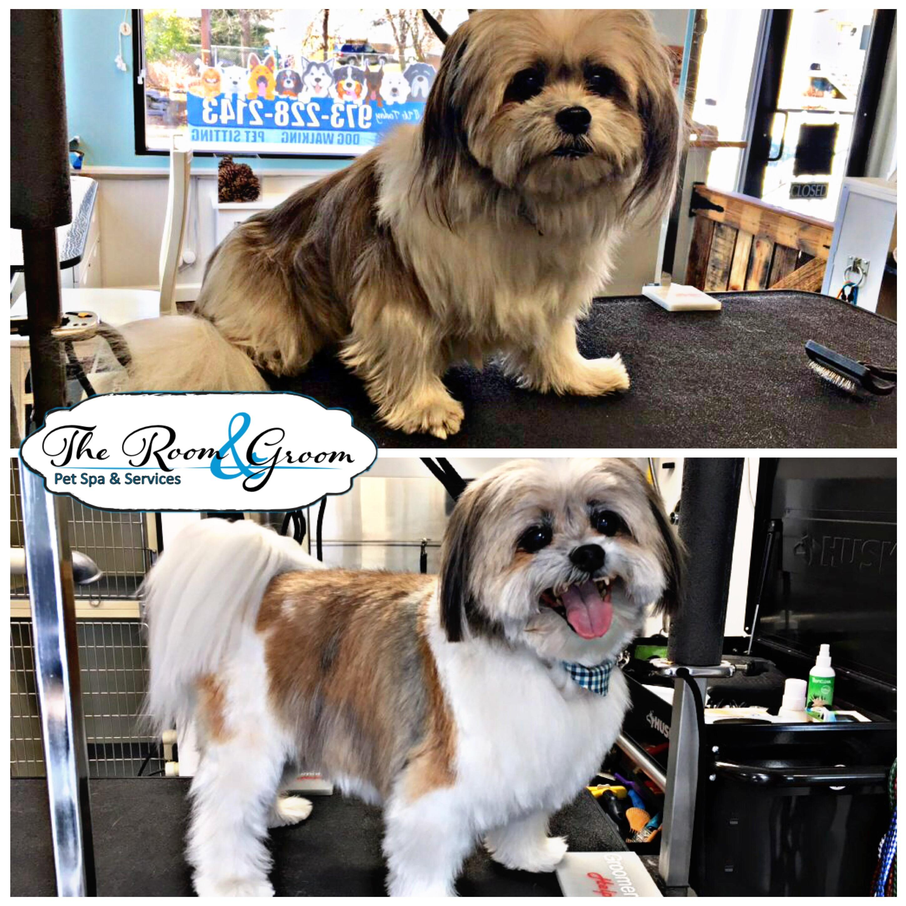 The Room & Groom, Pet Spa & Services image 50