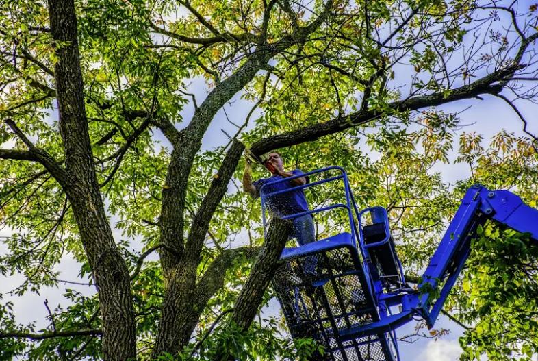 Mortensen Tree Service, Inc. image 3