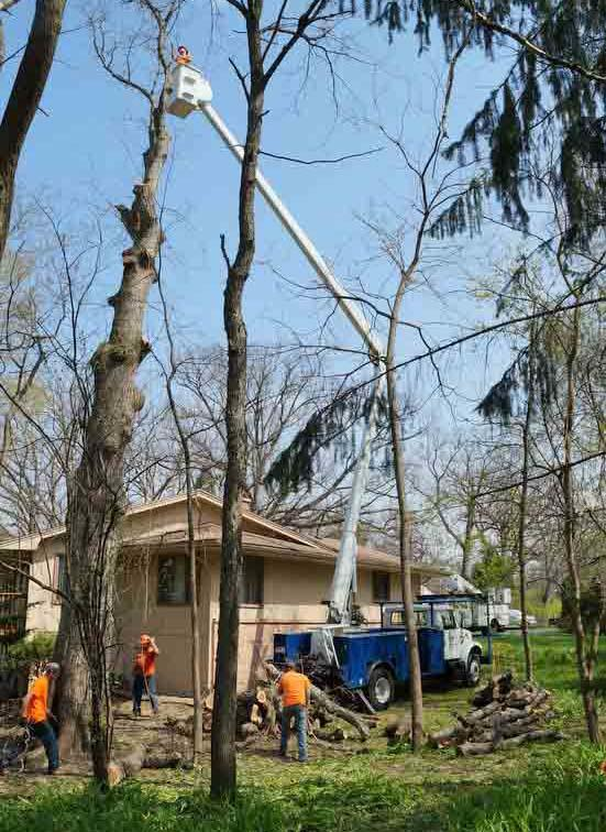 Flying W Tree Service image 7