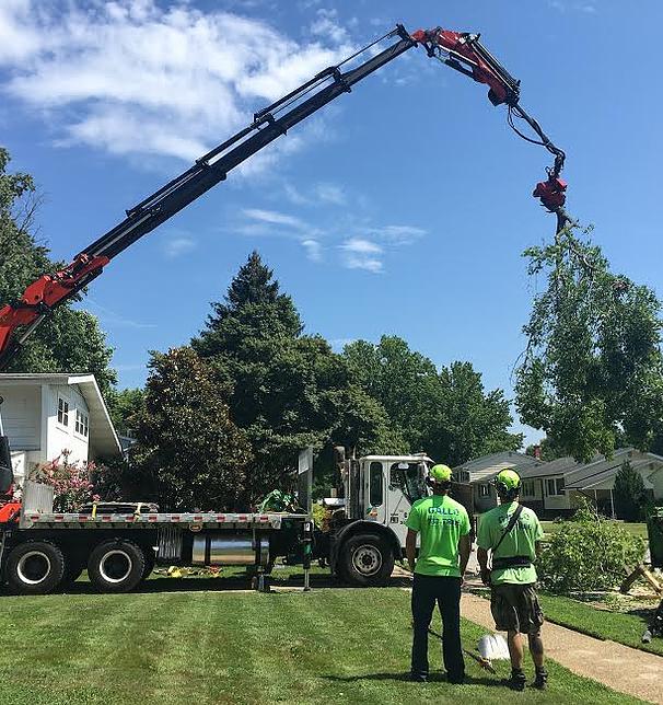 Gallo Tree Service, Inc.