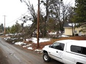 Able Tree Services image 9