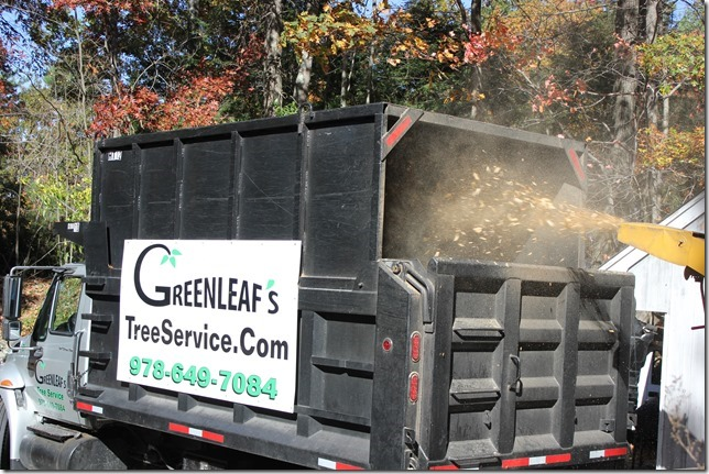Greenleaf's Tree Service image 14