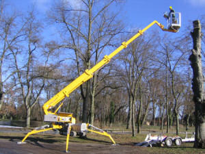Able Tree Services image 4