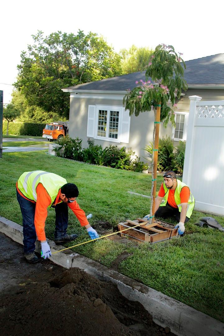 Flintridge Tree Care image 2