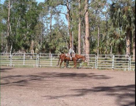 Piney Acres Training Stables image 0