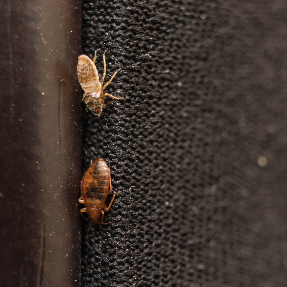 Bed bugs can be a real nuisance especially because it's so easy for you to get them. You can have the cleanest house on the planet and the possibility of getting bed bugs is still there. Don't try to get rid of them yourself because chances are, they will just come back. Call Leverett's Pest Control in Auburn! We will get rid of the problem and make sure they stay away for good.