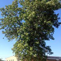 Big Jeff's Tree Service
